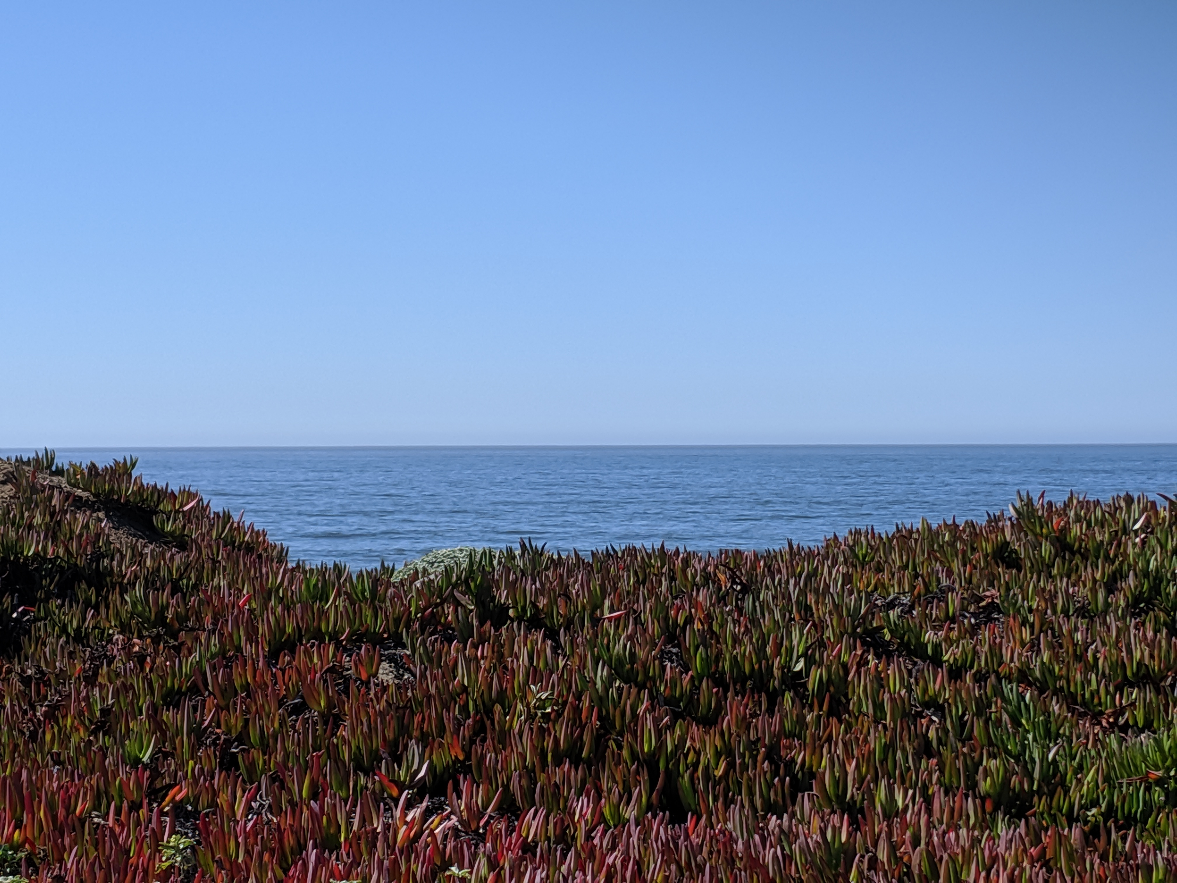 Ice plants, ocean, and sky.